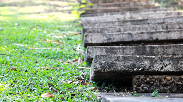 HD Dolly:Cement stairs near the lawn.