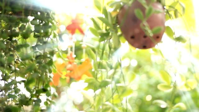 vídeos de stock, filmes e b-roll de hd zorra: cerâmica móvel no jardim. - mobile