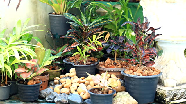 HD Dolly:Potted plants in the home garden. video