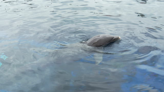 dolphin close up - video