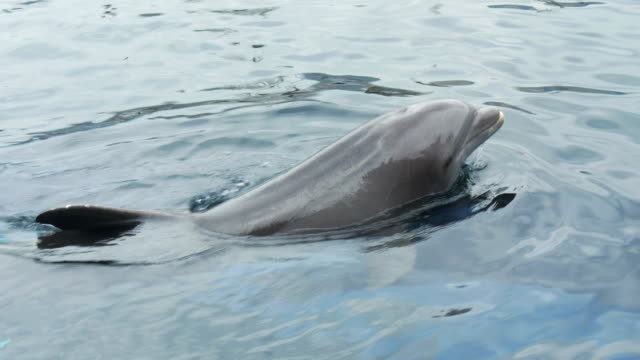 dolphin close up video