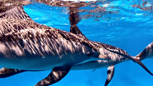 Dolphin pack. Underwater scenery Swimming in deep, turquoise sea. Dolphin family hard coral stock videos & royalty-free footage