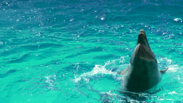 Dolphin pool  dolphin stock videos & royalty-free footage