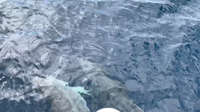 delfiner simning - egeiska havet bildbanksvideor och videomaterial från bakom kulisserna