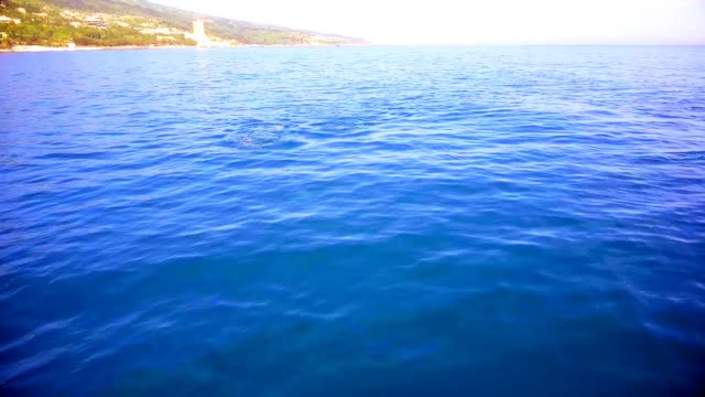 Dolphin swims in the blue sea, dolphins near the coast