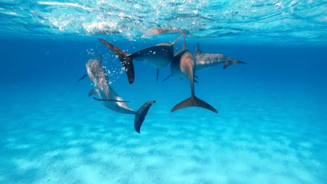 vidéos et rushes de dauphins. un troupeau de dauphins nager dans la mer ouverte - baleine