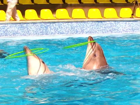 delfiny i hula hoop - ludzka kończyna filmów i materiałów b-roll
