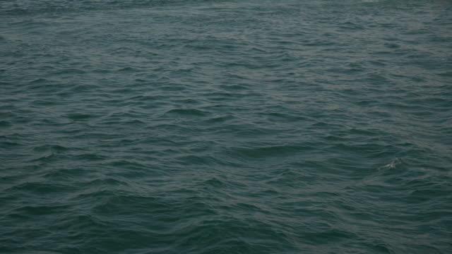 vídeos de stock, filmes e b-roll de golfinhos na superfície do mar - estreito mar