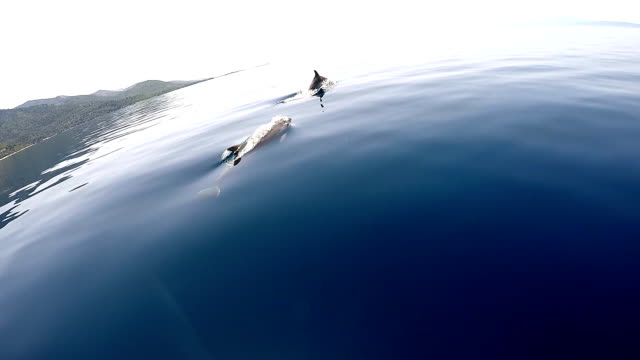 dolphins in mediterranean sea - morze egejskie filmów i materiałów b-roll