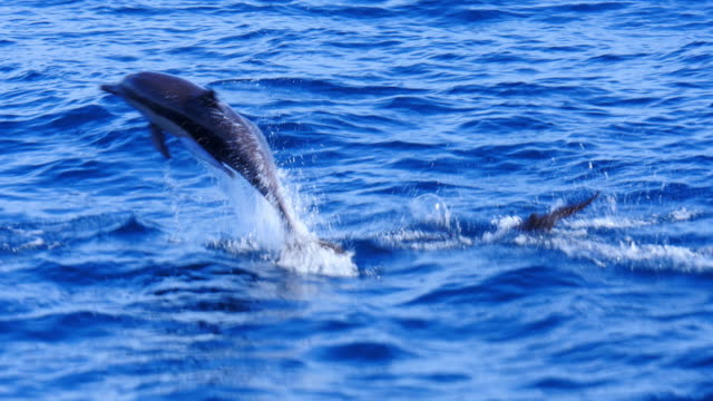 Dolphins jumping up out of the ocean Dolphins jumping up out of the ocean dolphin stock videos & royalty-free footage