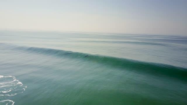dolphins surfing wave - oceano atlantico video stock e b–roll
