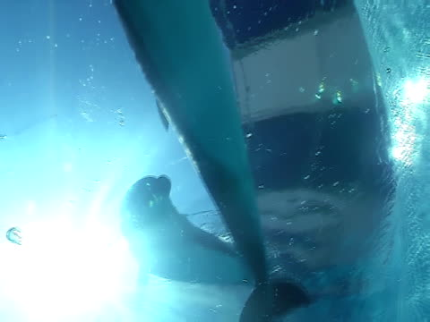 Dolphins swim pair video