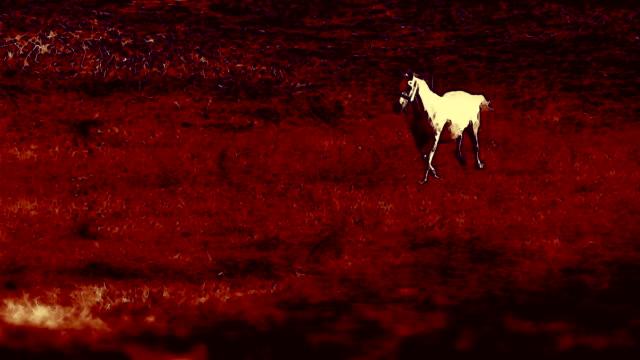 A domestic animal runs through a field and hits a hoof