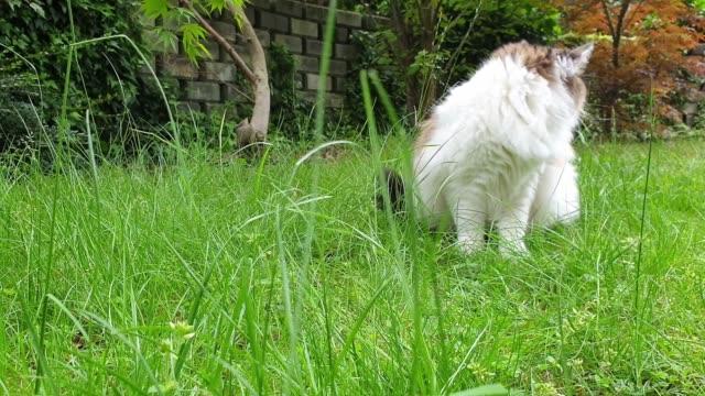 vidéos et rushes de chat domestique attrapant la souris - prise avec un appareil mobile