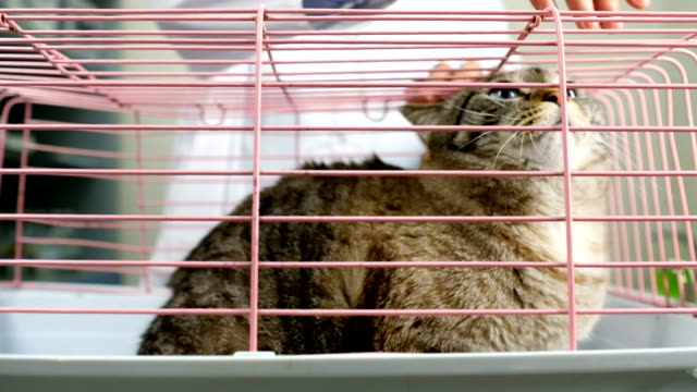 Domestic cat in cage at vet