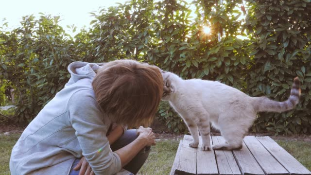 Domestic cat playing with woman in backlight