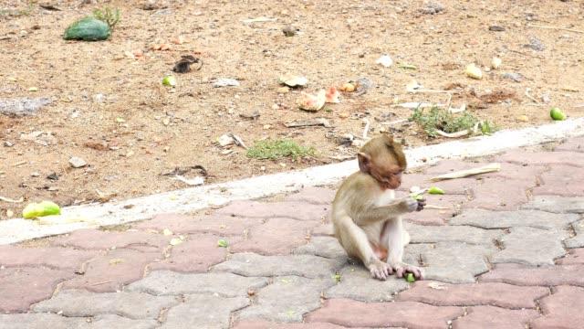 domestic monkeys in nakhon sawan, thailand - group of people filmów i materiałów b-roll