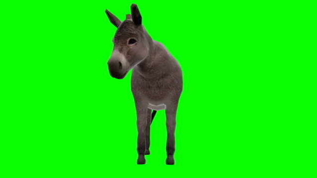 Donkey Chewing Green Screen (Loopable) Green-box hound stock videos & royalty-free footage