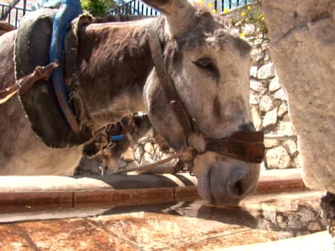 esel trinken - pferdeartige stock-videos und b-roll-filmmaterial