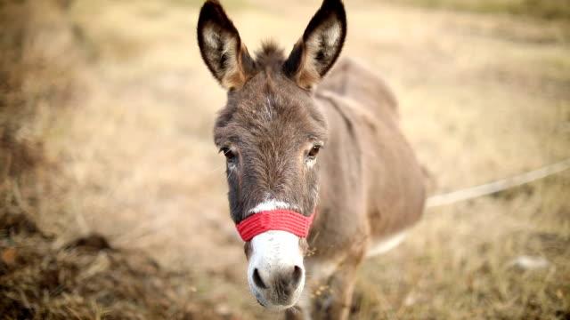 Donkey gazes the grass