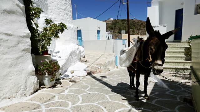 Donkey in Greece small village street video