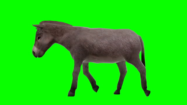 Donkey Walking Green Screen (Loopable)