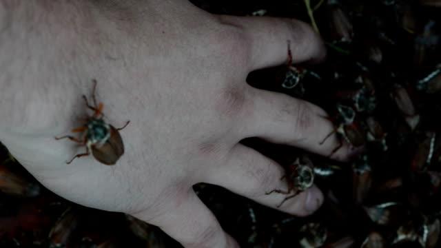 dor crawling fingers video