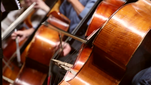 Double bass players video