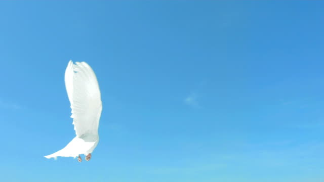 dove flying on blue sky (super slow motion) - flyga bildbanksvideor och videomaterial från bakom kulisserna