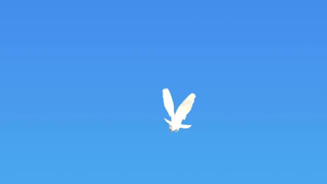 Dove Flying On Blue Sky (Super Slow Motion) video