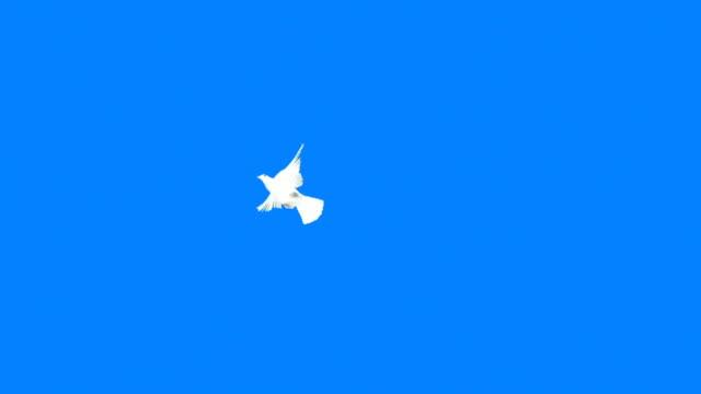 colomba volando su sfondo blu (super rallentatore) - colomba video stock e b–roll
