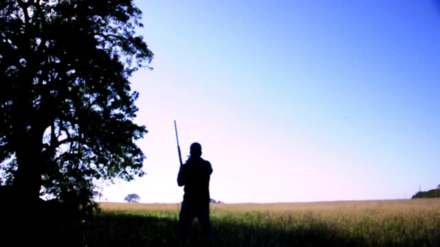 dove hunting  - no birds - hunting stock videos and b-roll footage