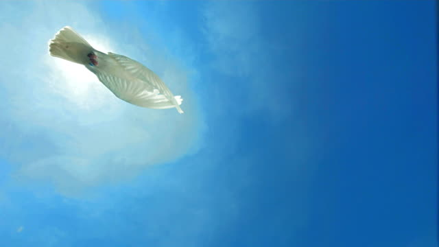 Dove Of Peace Flying Over Sky (Super Slow Motion)