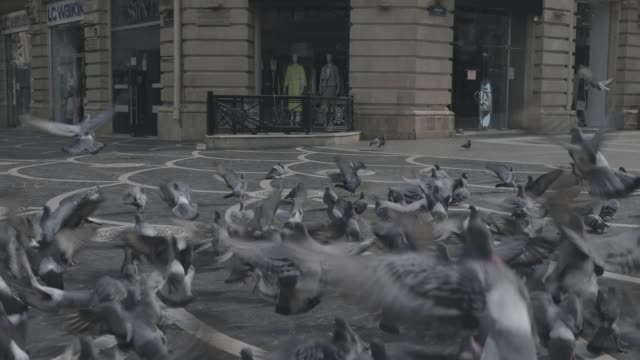 Video BAKU, AZERBAIJAN - APRIL 7, 2020 - Downtown Baku, Azerbaijan. Empty streets of Baku, the capital of Azerbaijan at Daytime. Covid pandemic happening. Steady cam shot. Large group of pigeons walking