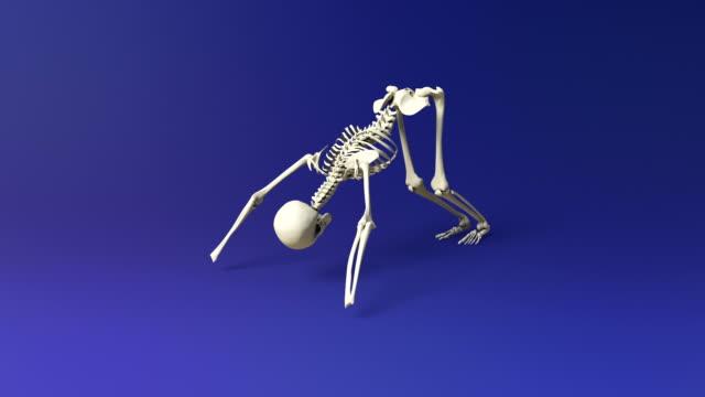Downward Facing Dog Pose Of Human Skeletal video