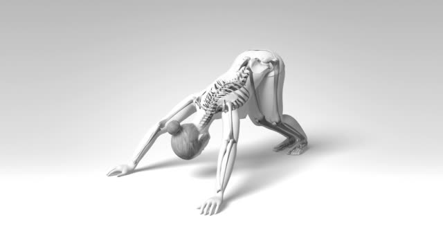 Downward Facing Dog Pose Of Stretching Young Female Visible Skeleton video
