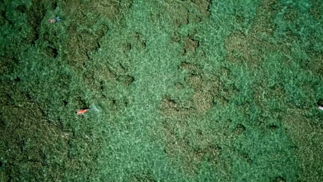 Downward View of Snorkelers in Shallow Water in Hawaii video