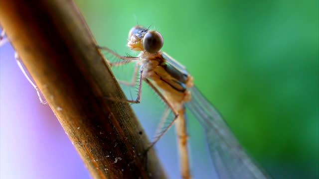 vidéos et rushes de libellule visage détail - couleur saturée