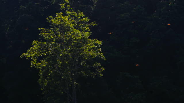 Dragonfly in the morning video
