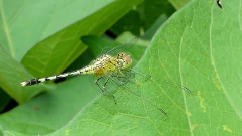 libelle auf blätter im tropischen regenwald. - gliedmaßen körperteile stock-videos und b-roll-filmmaterial