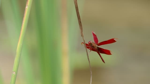 Dragonfly on the grass shoot video