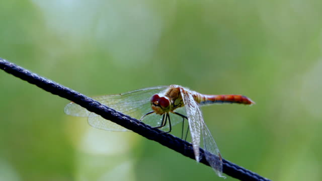 Dragonfly on the rope video