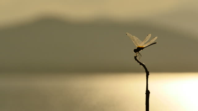 Dragonfly perched on a branch. video