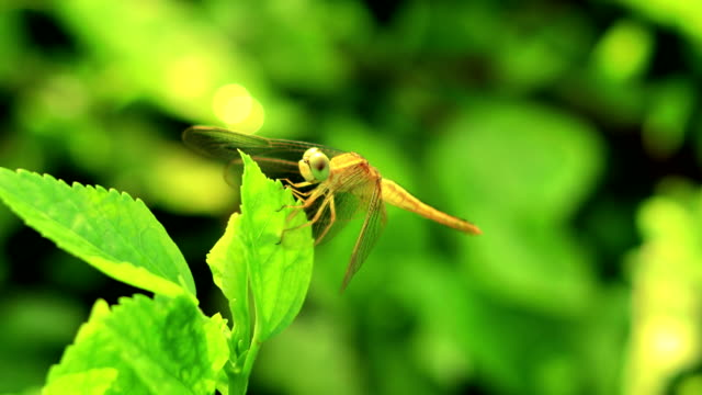 Dragonfly sitting on nature plant video
