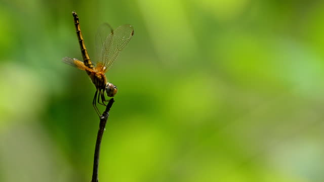 stockvideo's en b-roll-footage met dragonfly - arthropod