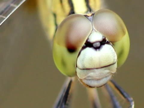 libellula s eye - parte della pianta video stock e b–roll
