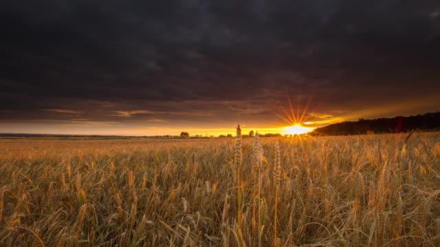 t/l dramatiska molnlandskap över ett fält av vete vid solnedgången - gröda bildbanksvideor och videomaterial från bakom kulisserna