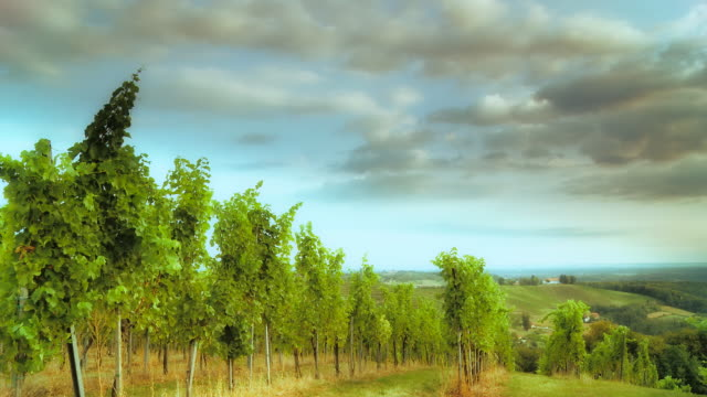 HD TIME LAPSE: Dramatic Cloudscape Over The Vineyard video
