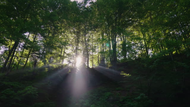 a dramatic dawn in the forest. sunlight shines through trees - trees in mist stock videos & royalty-free footage