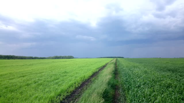 Dramatic rain clouds and lightning on sky above green cultivated field video